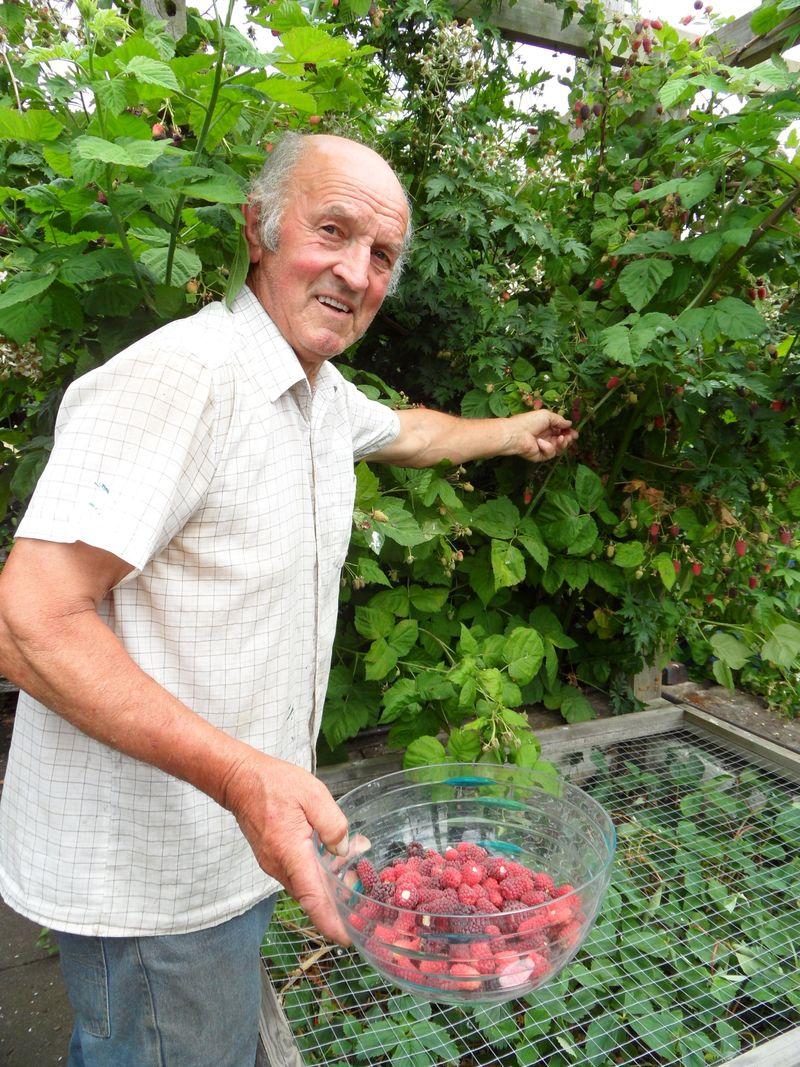 John picking loganberries