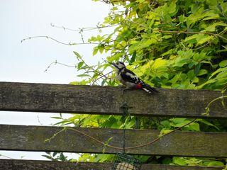 Close- up of Woodpecker on Pergola