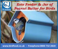 Blue Evie Feeder CJW image022