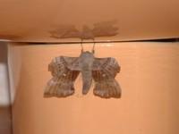 Moth3425