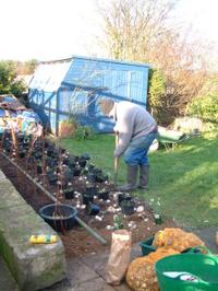 John_planting_roses_flower_bed