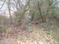 Mill_farm_wild_garden_drain_20_feb_
