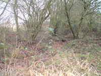 Mill_farm_wild_garden_drain_20_feb_
